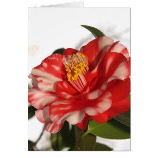 redwhitecam card