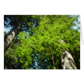 Redwood Boughs in Redwood National Park Card