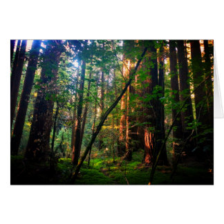 Redwood Forest Card