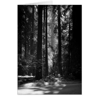 Redwood Forest, Founder's Grove, 1966 Card