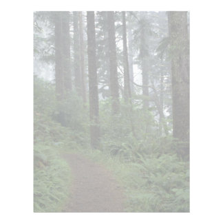 Redwood forest in fog, Oregon Letterhead