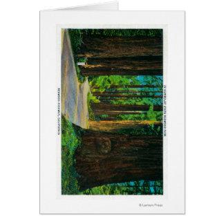 Redwood Highway in Humboldt State Redwood Park Greeting Card