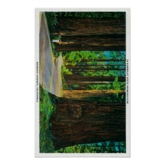 Redwood Highway in Humboldt State Redwood Park Poster
