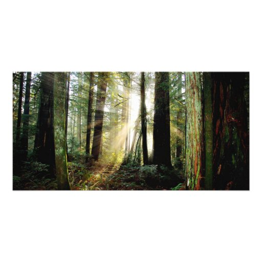 Redwood Morning Personalized Photo Card