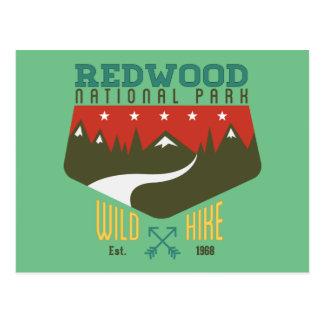 Redwood National Park Postcard