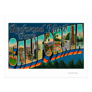 Redwood Nat'l Park, California Postcard