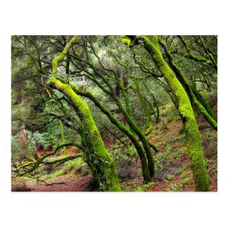 Redwood Regional Park, California Postcard
