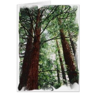 Redwood Sky Card
