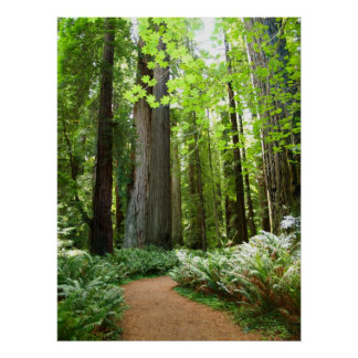 Redwood Trail Poster