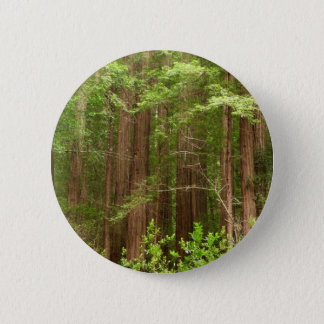 Redwood Trees at Muir Woods National Monument 2 Inch Round Button