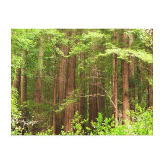 Redwood Trees at Muir Woods National Monument Canvas Print