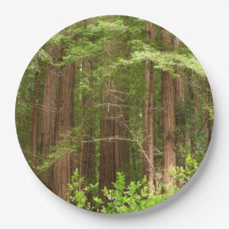 Redwood Trees at Muir Woods National Monument Paper Plate
