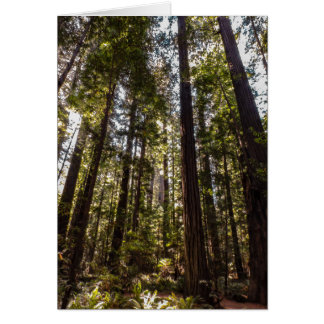 Redwood Trees - Blank Greeting Card