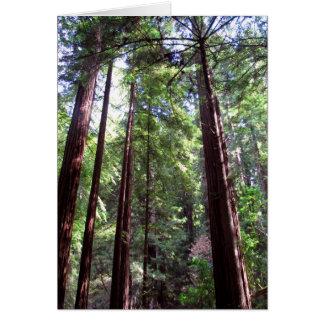 Redwood Trees Card