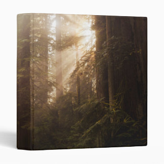 Redwood Trees in Morning Fog with Sunrays 3 Ring Binder