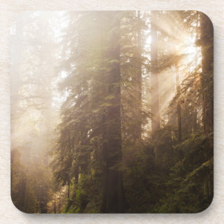 Redwood Trees in Morning Fog with Sunrays Coaster