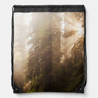 Redwood Trees in Morning Fog with Sunrays Drawstring Bag