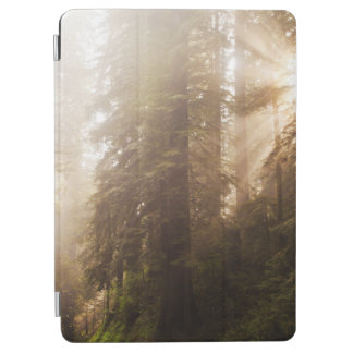 Redwood Trees in Morning Fog with Sunrays iPad Air Cover