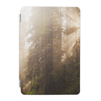 Redwood Trees in Morning Fog with Sunrays iPad Mini Cover
