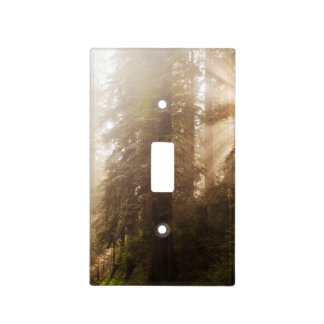 Redwood Trees in Morning Fog with Sunrays Light Switch Cover