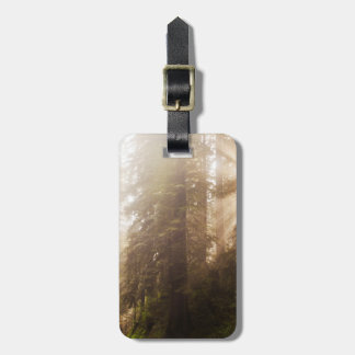 Redwood Trees in Morning Fog with Sunrays Luggage Tag