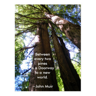 Redwood Trees Muir Quote Postcard