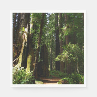 Redwoods and Ferns at Redwood National Park Napkin