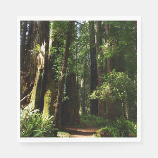 Redwoods and Ferns at Redwood National Park Paper Napkin