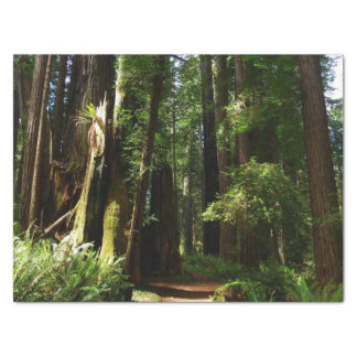 Redwoods and Ferns at Redwood National Park Tissue Paper