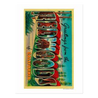 Redwoods, California - Large Letter Scenes Postcard
