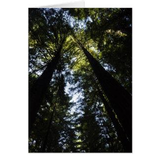 Redwoods Card