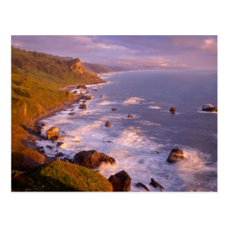 Redwoods coastline, California Postcard