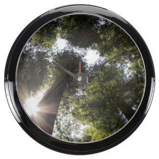 Redwoods, Humboldt Redwoods State Park Aqua Clock