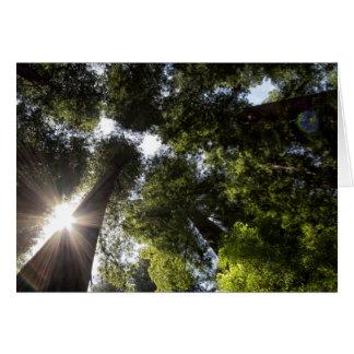 Redwoods, Humboldt Redwoods State Park Greeting Cards