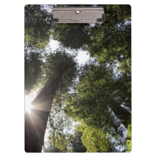 Redwoods, Humboldt Redwoods State Park Clipboard