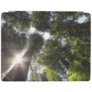 Redwoods, Humboldt Redwoods State Park iPad Cover