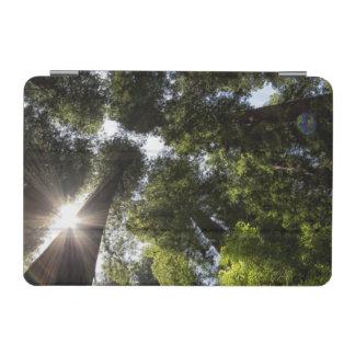 Redwoods, Humboldt Redwoods State Park iPad Mini Cover