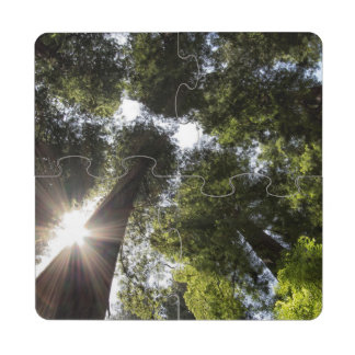 Redwoods, Humboldt Redwoods State Park Puzzle Coaster