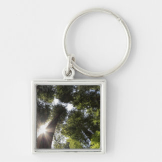 Redwoods, Humboldt Redwoods State Park Silver-Colored Square Keychain