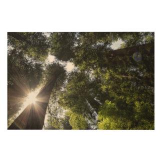 Redwoods, Humboldt Redwoods State Park Wood Canvases