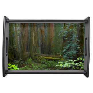 Redwoods In Muir Woods National Park Serving Tray