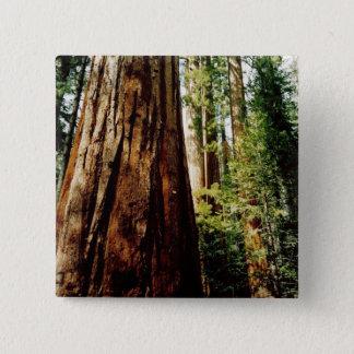 Redwoods- Yosemite 2 Inch Square Button