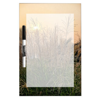 Reed At Sunset Dry Erase Board