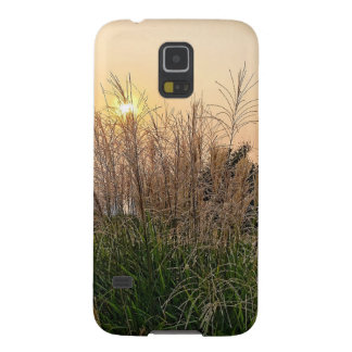 Reed At Sunset Galaxy S5 Covers