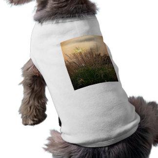 Reed At Sunset Shirt