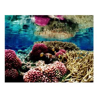 reef-386973  reef coral landscape colorful underwa postcard