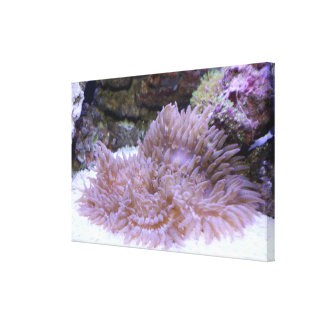 Reef art #3 canvas print