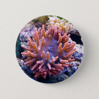 Reef collections button #6