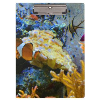 reef fish coral ocean clipboard