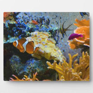 reef fish coral ocean plaque